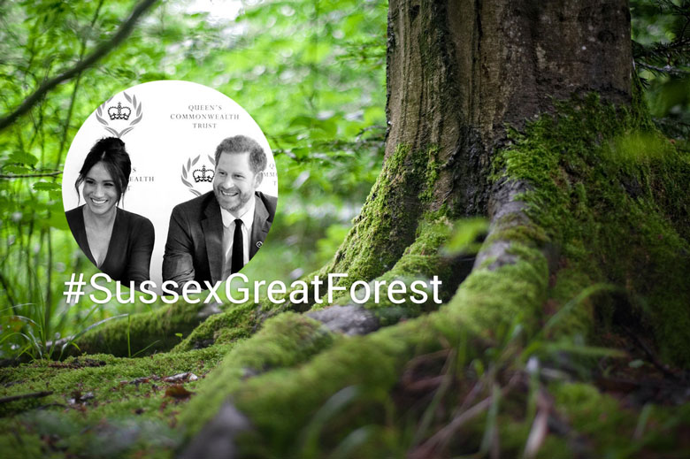 Sussex Great Forest